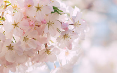 Spring is Coming ~ Thank you Steven Curtis Chapman